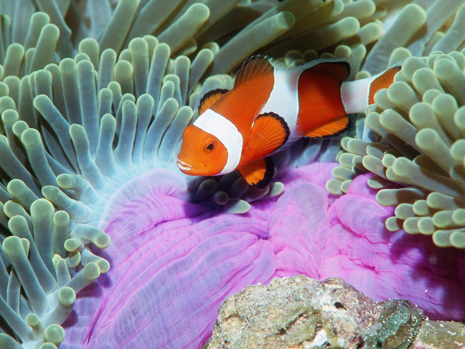 http://3.bp.blogspot.com/-hybi9KBfEvQ/Tg4rgD_3RjI/AAAAAAAABBI/SGHESVz3Wbg/s1600/Underwater+Wallpaper+%252897%2529.jpg