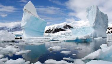 ¿Bosques en la Antártida?