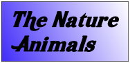 The Nature Animals