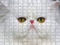Little white cat Puzzle