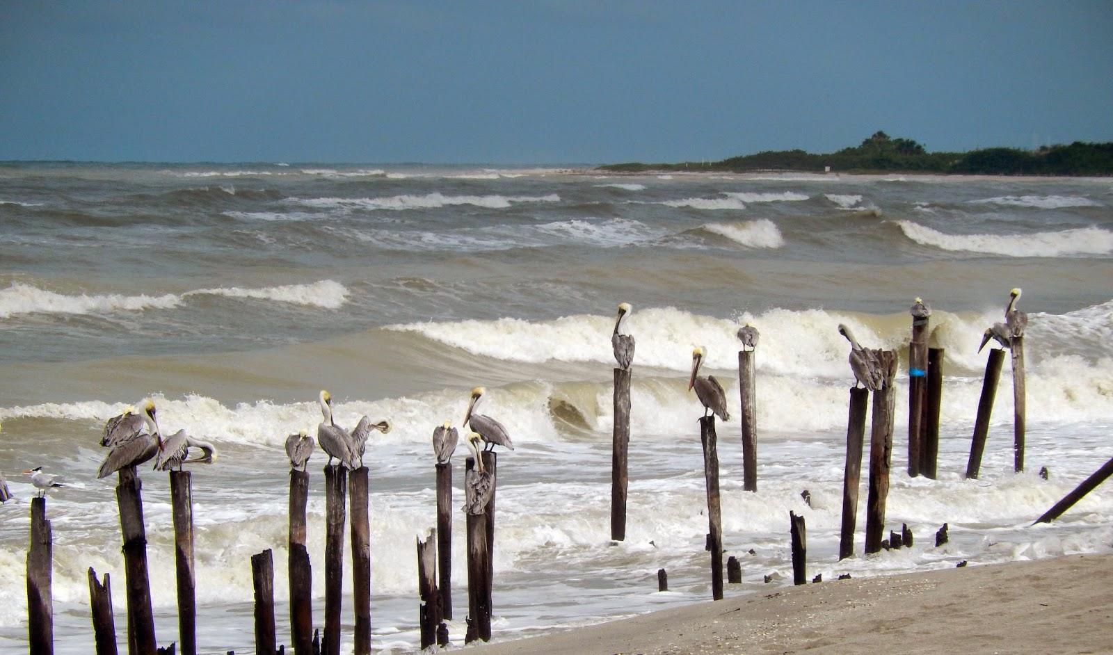 Pelicanos, mar brava, tabasco, mexico
