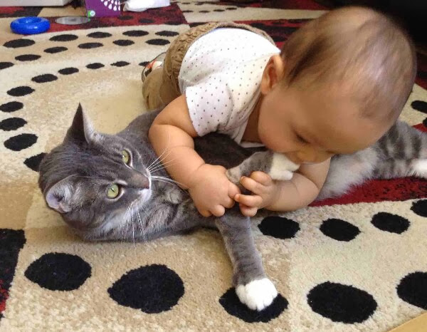 Funny cats - part 78 (35 pics + 10 gifs), cat pics, cat playing with human baby