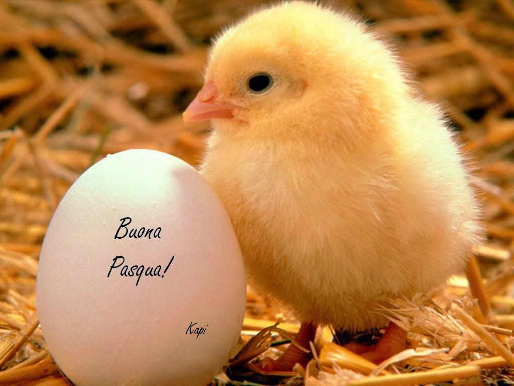 frasi spiritose per auguri pasqua - Auguri per Pasqua Sms pronti