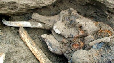Mammoth remains found in Uzbekistan