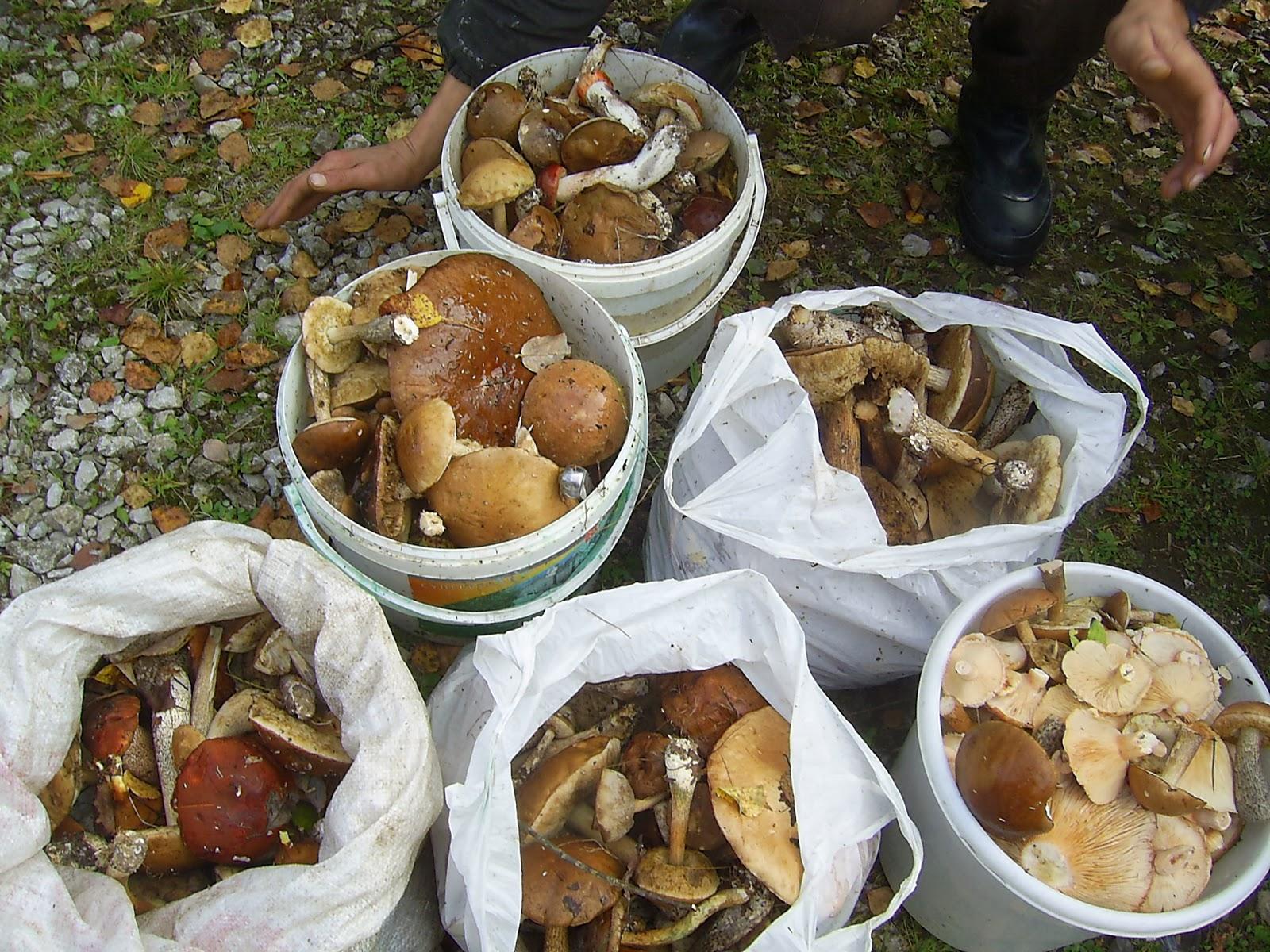 заготовки на зиму икра из грибов рецепты
