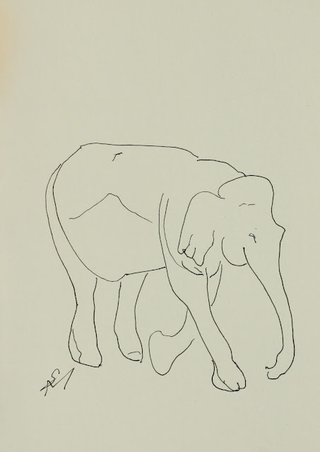 Elephant Striding, walking, Sarah Myers, S. Myers, Ink, drawing, arte, sketch, line-drawing, paper, study, animal