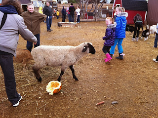 Field Trip Petting Zoo at the Corn Maze