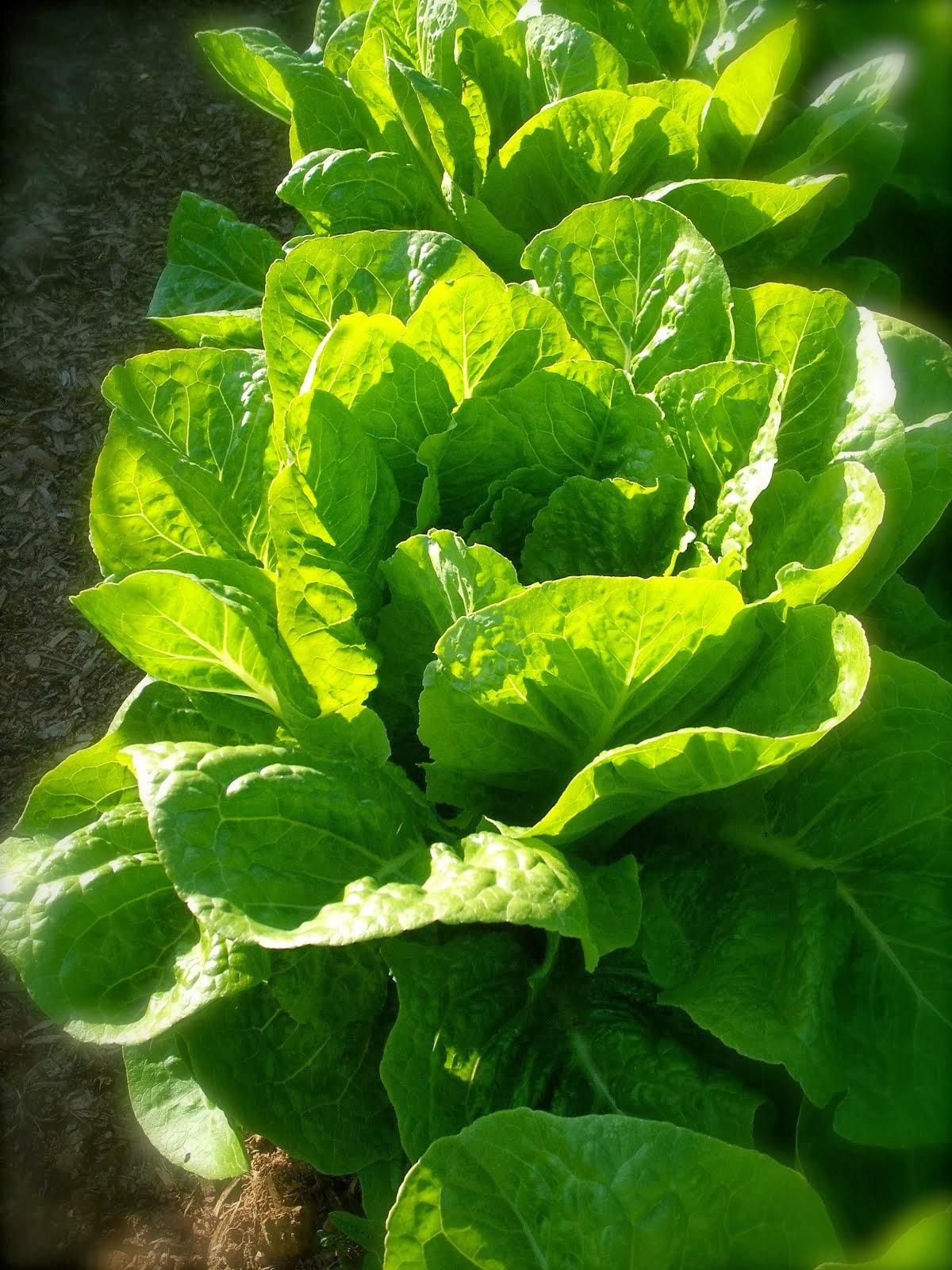 Beyond Organic Produce