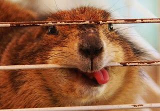 Ist das ein Hamster?