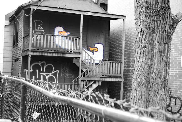 Chicago Graffiti Duck
