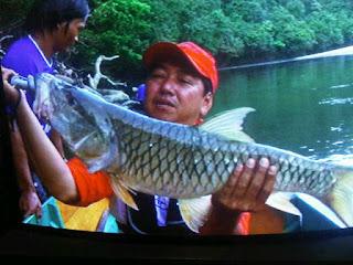 Berburu Hampala Di Kalimantan Timur