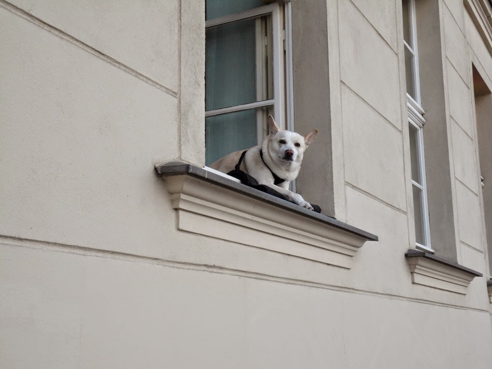 Apartment dog is watching you!