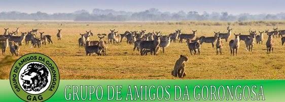 http://amigosdagorongosa.blogspot.pt/
