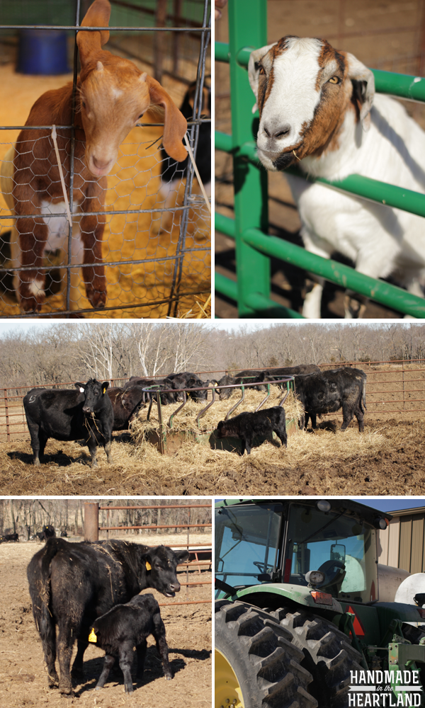 KS Farm Bureau Farm Tour, Tuttle Farm