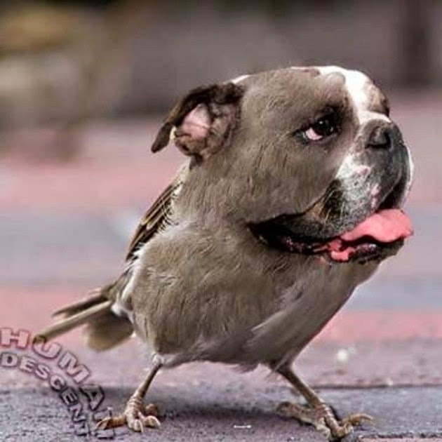 birds-dog-funny-animals-4