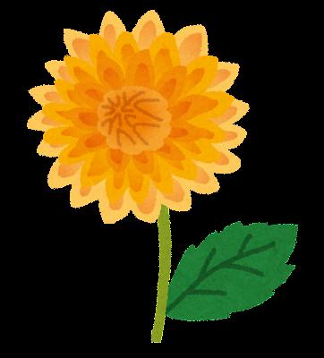 黄色いダリアのイラスト(花)