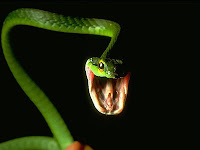 Serpiente verde venenosa