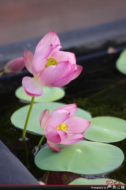 2011.6.25 台北植物園