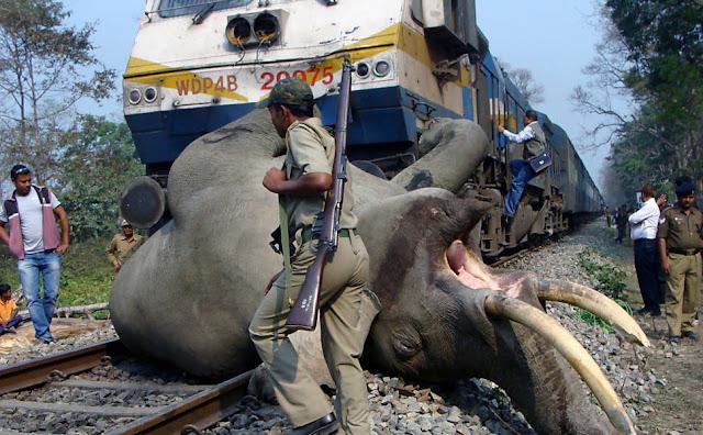 Trem atropela e mata elefante na Índia