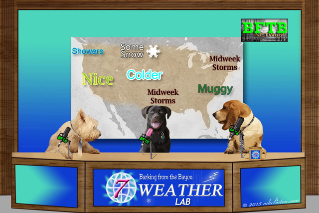 BFTB NETWoof weather with Paisley the Lab