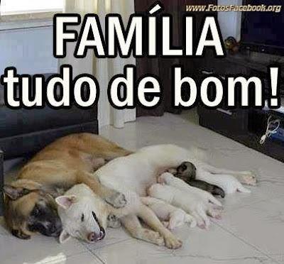 Fotos fofas de animais para ao Facebook