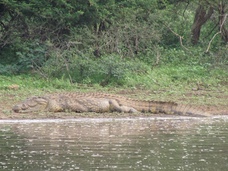 Tijdens de middagsafari rondom Skukuza komen we voorbij Sunset Dam, een dam die een enorme plas water op zijn plaats houdt. Het wemelt er van de krokodillen.