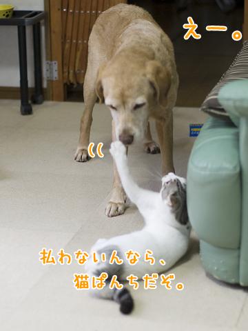 子猫に猫パンチされる犬