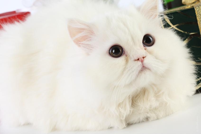 foto kucing lucu. Langsung saja, ini dia beberapa foto kucing lucu