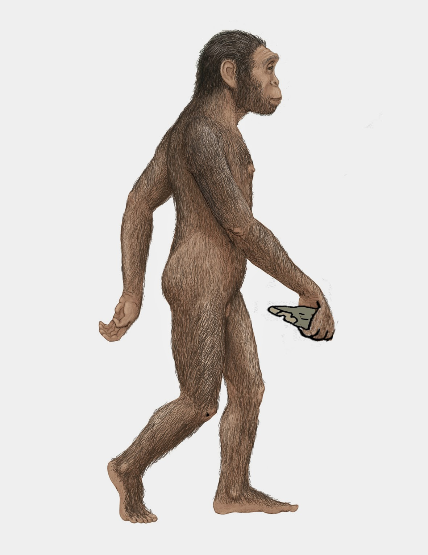 educacion infantil silvio abad LA EVOLUCION DEL HOMBRE ORDENANDO