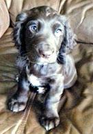 Little Rowan at 11 weeks