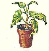 doencas-plantas
