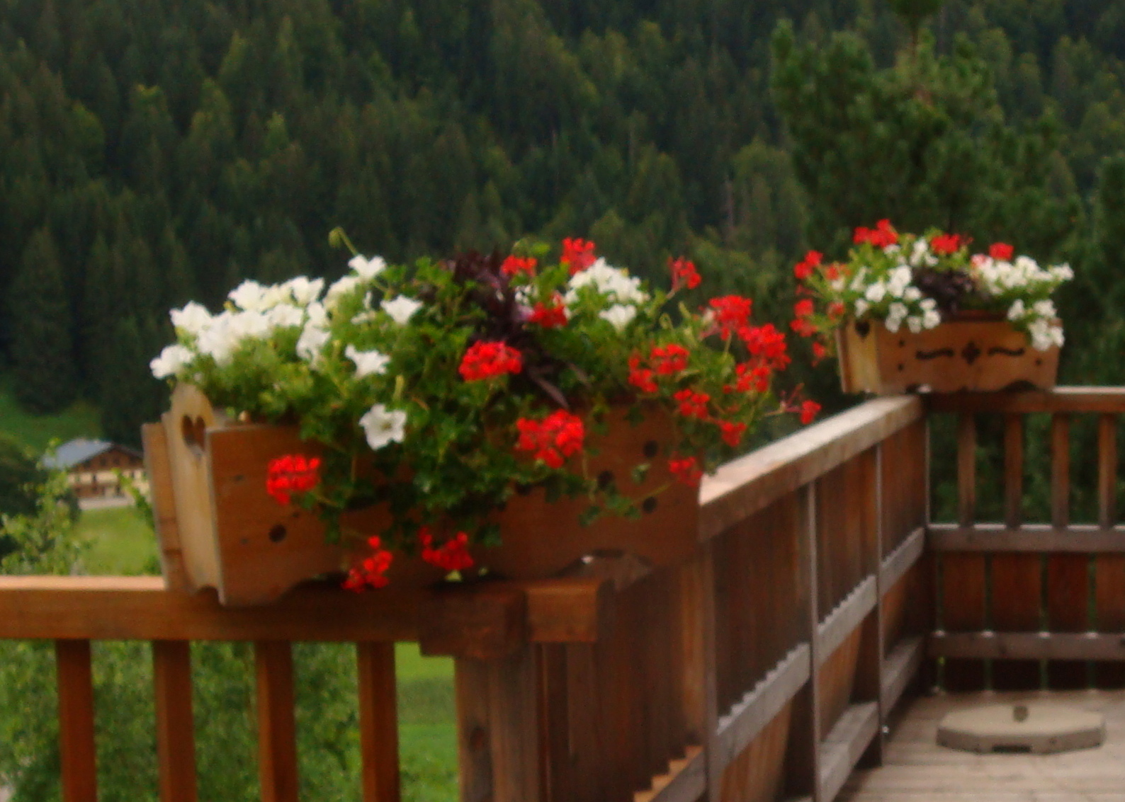 Un jardin de montagne dernier jour la montagne for Jardin 2 montagnes