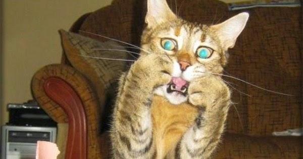 cat has eye discharge
