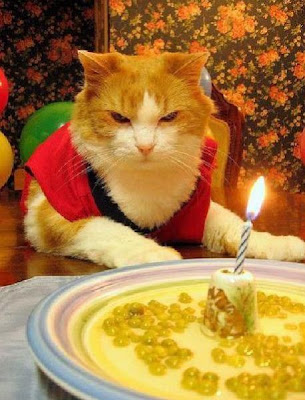 Cats Birthday Parties Seen On www.coolpicturegallery.us