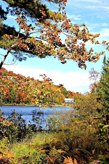 Fall foliage in upstate NY - www.goldenboysandme.com