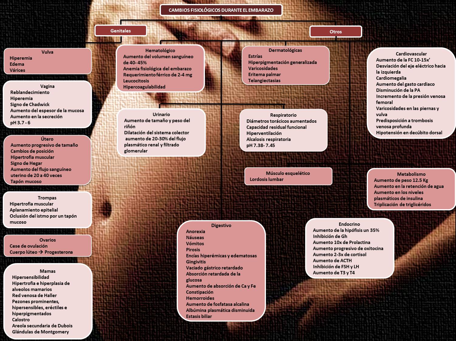 Ginecología y Obstetricia: Mapa Conceptual No. 6 Cambios ...