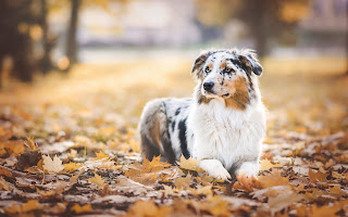 HD Animal Wallpaper