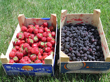 Late Spring Berries from the Patch