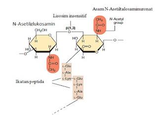 pseudomurein