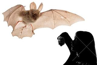 Bats and Hair