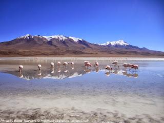 flamingos in salar de uyuni