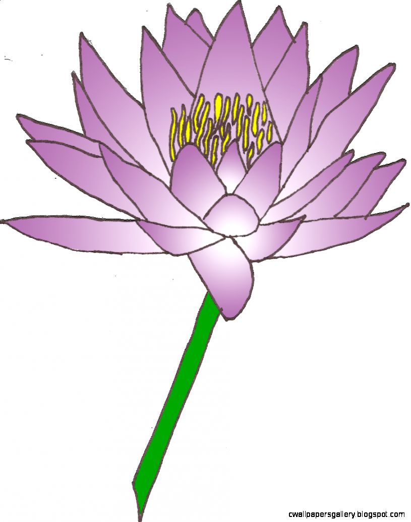 Lily pad flower clipart image 26848