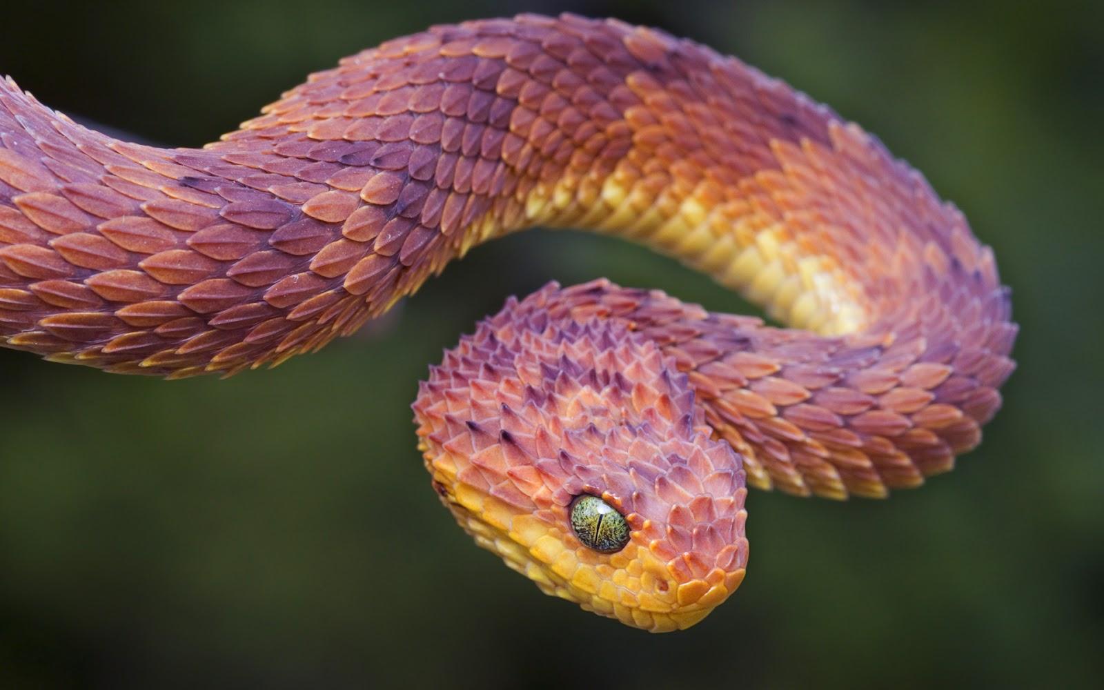 download pink snake wallpaper