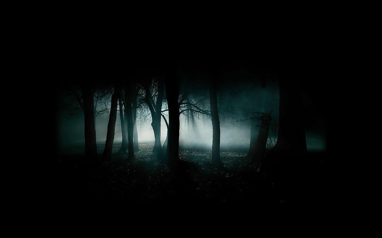 http://3.bp.blogspot.com/-i56qhvL_GW0/TtxIsCGQjwI/AAAAAAAAAjU/Eg8QHRjkTAs/s1600/rainforest-wallpaper-hd-3-775423.jpg