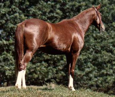 Significado dos Sonhos com Cavalo