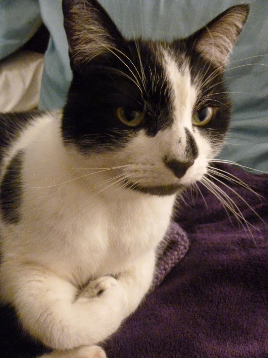 cat sitting on knitting