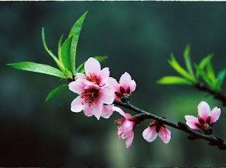 Feeling in new Hanoi spring