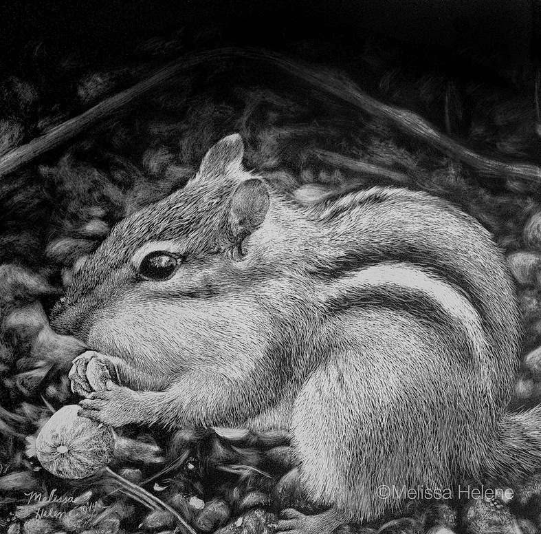 06-Chipmunk-Melissa-Helene-Amazing-Expressions-in-Scratchboard-Animal-Portraits-www-designstack-co