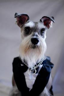 ceviche wedding dog