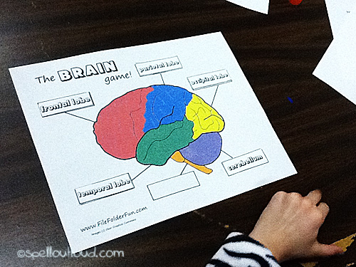 Human Anatomy The Nervous System Spell Out Loud – Parts of the Brain Worksheet
